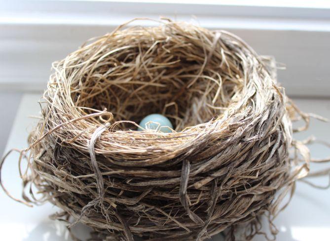 Nest1_15Mar16